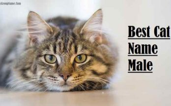 Best Cat Name Male, cat
