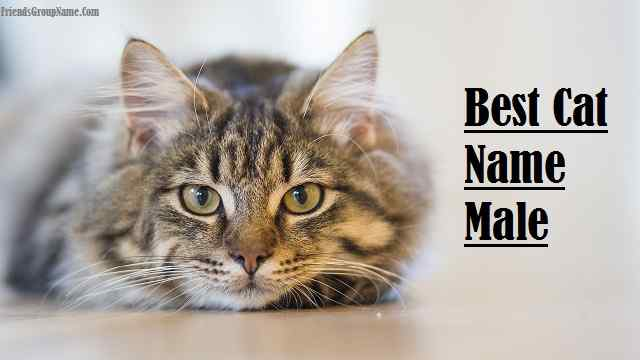 Best Cat Name Male For Funny, Cool And Unique Names List