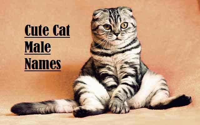 Cute Cat Male Names, cat
