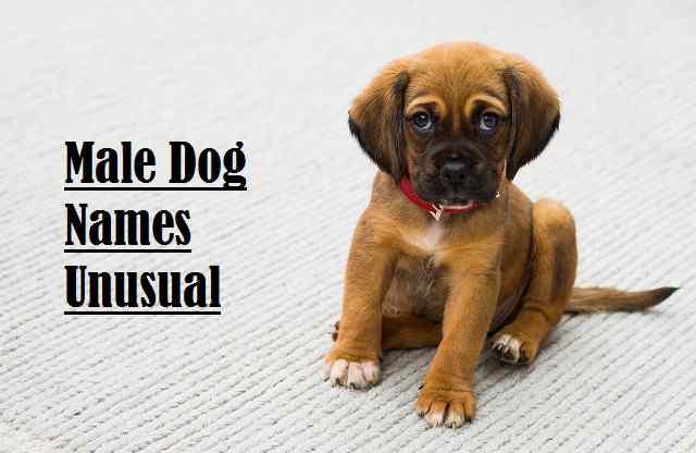 Male Dog Names Unusual
