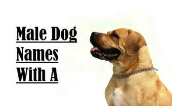 Male Dog Names With A