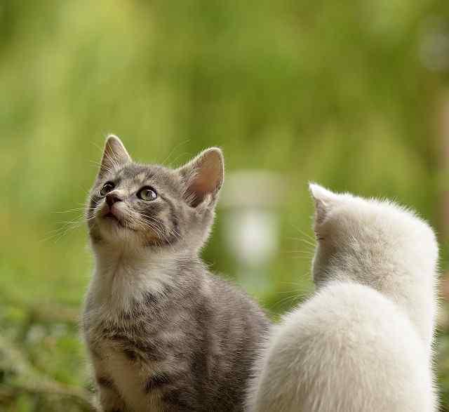 Male Kitten Names, cat