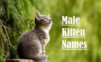 Male Kitten Names, cat
