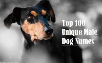 Top 100 Unique Male Dog Names