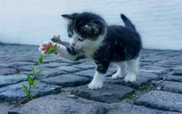girl kitty names, kittens, cat