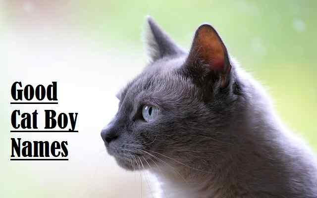 Good Cat Boy Names, cat