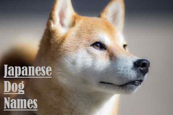 Japanese Dog Names, dog