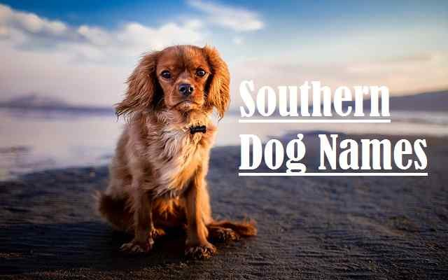 Southern Dog Names, cat