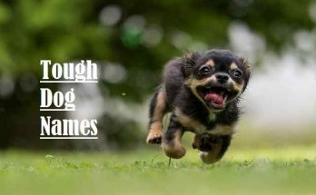 Tough Dog Names, Girl, Boy