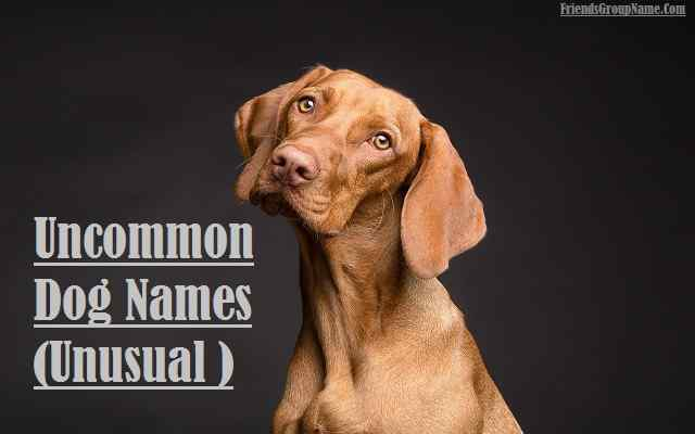 Uncommon Dog Names Unusual