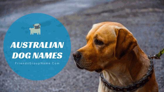 Australian Dog Names, dog names