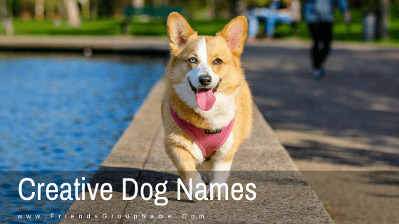 Creative Dog Names, dog names