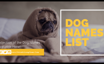 Dog Names, male dog names, female dog names