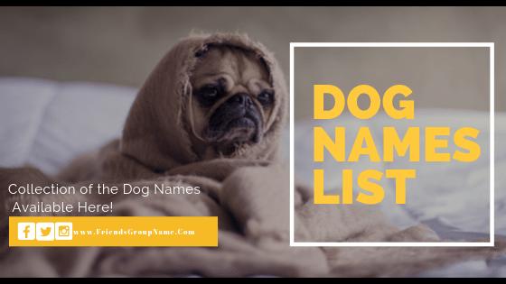 Dog Names, male dog names, female dog names