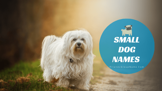 Small Dog Names, dog names