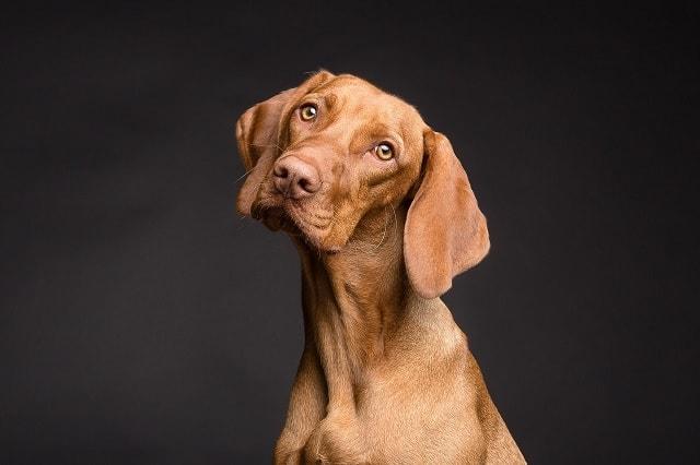 Dog Names, dog, male dog, female dog