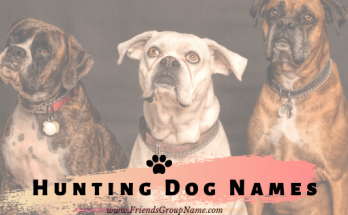Hunting Dog Names, Hunting Dog, dog