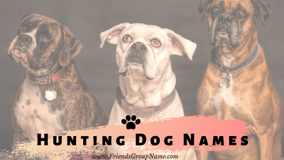Hunting Dog Names, Hunting Dog, dog