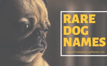 Rare Dog Names, dog names, dog