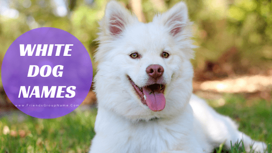 White Dog Names, dog