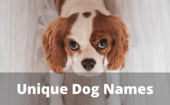 Unique Dog Names, dog names