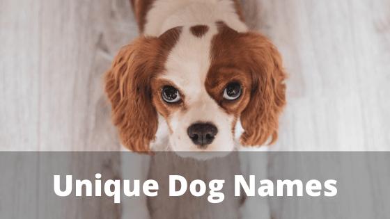 Unique Dog Names, dog names