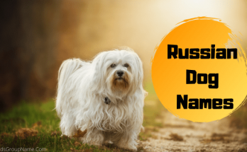 Russian Dog Names, dog names