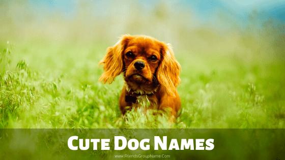 Cute Dog Names, dog names