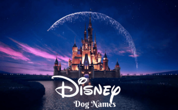 Disney Dog Names, Disney