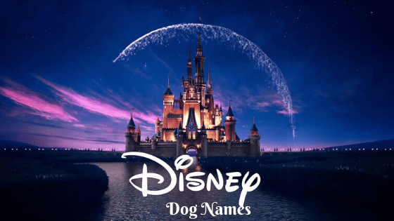 Disney Dog Names, Disney