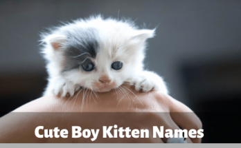 Cute Boy Kitten Names, kitten, cat
