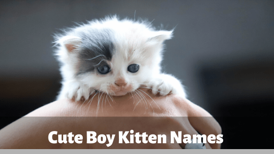 Cute Boy Kitten Names, kitten, cat