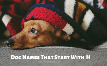 Dog Names That Start With H, dog names