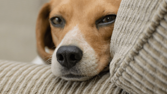 Dog Names That Start With Z, dog names