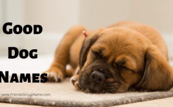 badass dog names, puppy, dog