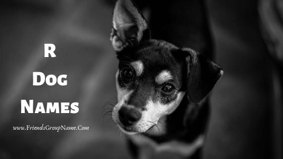 R Dog Names, dog names