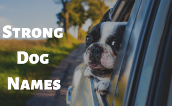 Strong Dog Names, dog names