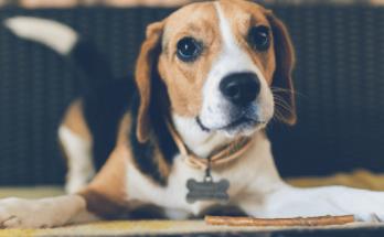 K Dog Names, Dog Names
