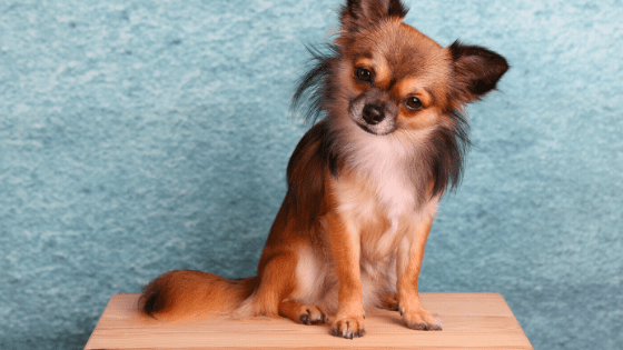 Boy Puppy Names, male puppy names