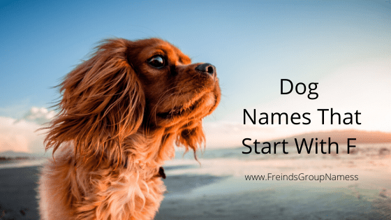 Dog Names That Start With F, dog names