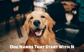 Dog Names That Start With N, dog names