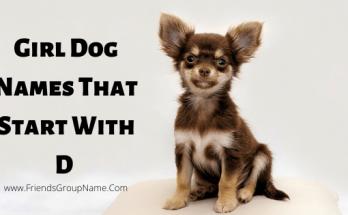Girl Dog Names That Start With D, girl dog names, girls dog