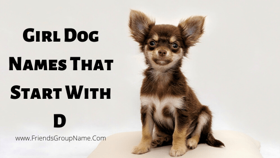 Girl Dog Names That Start With D, girl dog names, girls dog