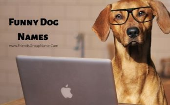 Funny Dog Names, dog names, puppy names,