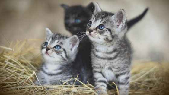 Cute Kitten Names, cat names, cat