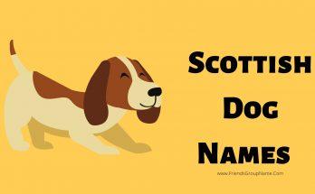 Scottish Dog Names, Dog Names